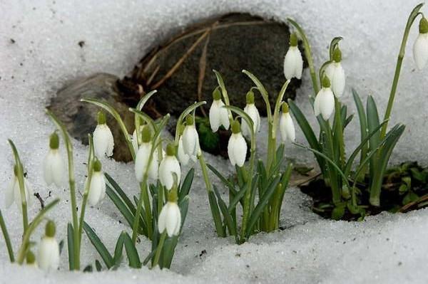 Наступление весны