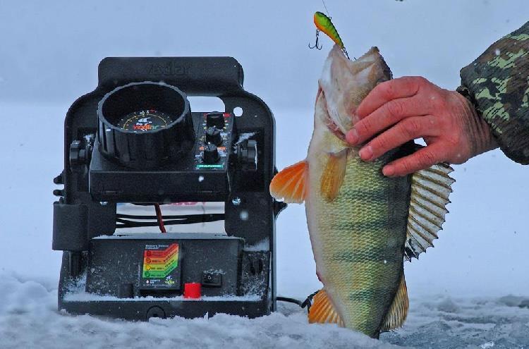 из рук на цыпки пользу кого рыбалки