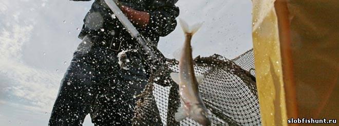 Этим летом в России могут узаконить платную рыбалку
