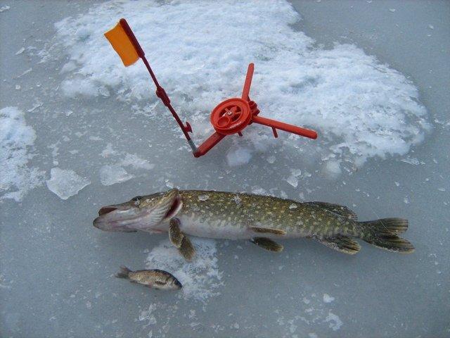 что такое лов рыбы на жерлицу
