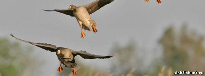 Сроки открытия весенней охоты 2014