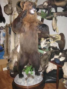 Чучело медведя купить