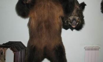 медведь в агрессивной позе