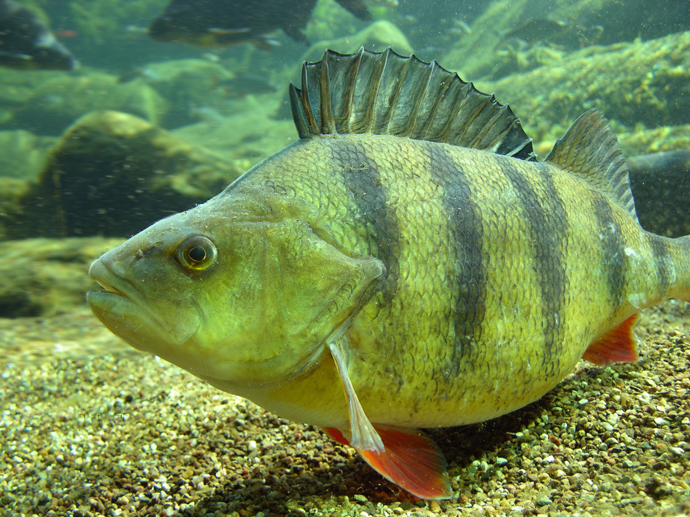 Если рыба гниёт с головы, то чистят её… с головы же!