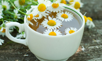 Чай из цветков ромашки