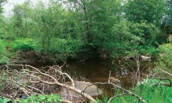 место ловли спиннингом на малой речке