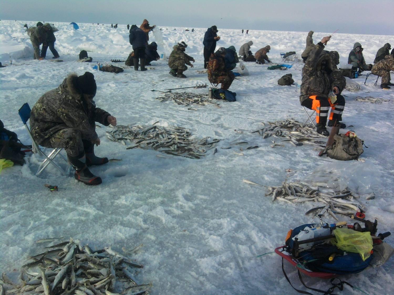 Рыбаки на льду ловят кучу рыбы