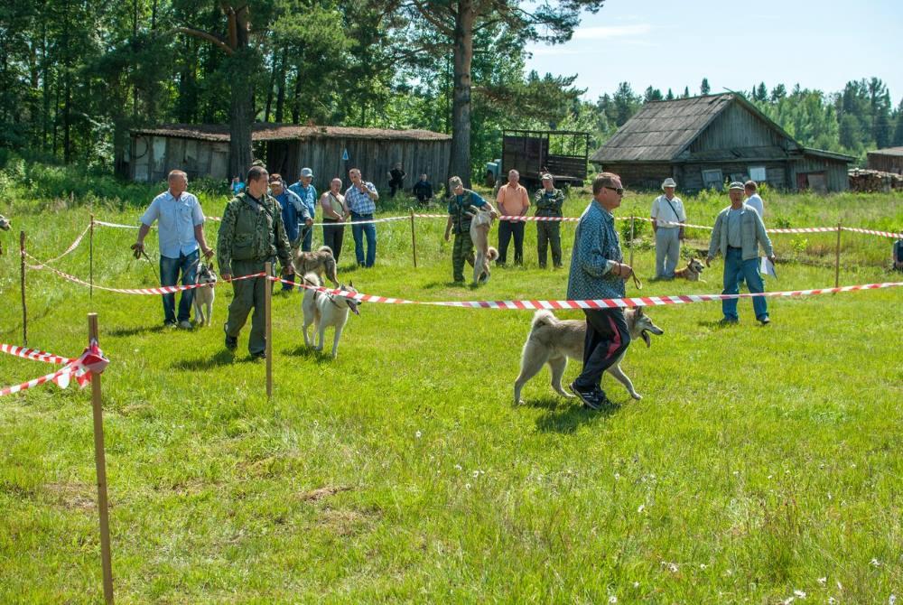 выставка собак в слободском