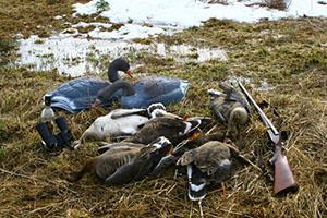 сроки весенней охоты в камчатском крае