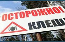 Клещи открыли охоту в Кировской области