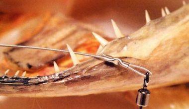 Поводки для спиннинговой ловли: виды и особенности выбора