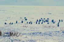 Охота на зайца зимой и осенью без собак