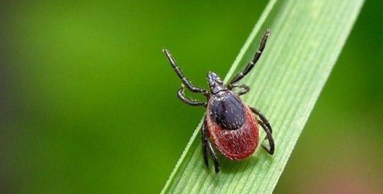 Защита от укусов клещей