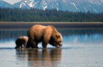 Особенности туризма в Аляске