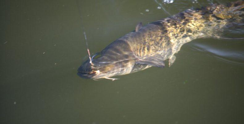 На рыбалку — с комфортом