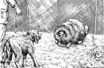 Притравка норных собак