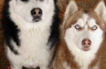 Подготовка собаки к охоте