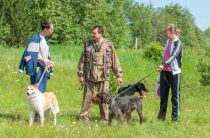 62 выставка охотничьих собак в Слободском