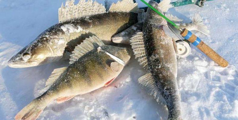 В Чудские дали за «БОЛЬШОЙ» рыбой