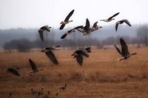 открытие весенней охоты в архангельской области