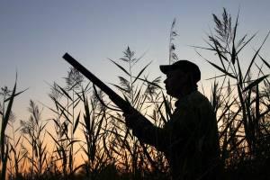 охотник в тростнике