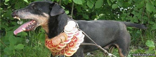Слободская районная выставка охотничьих собак