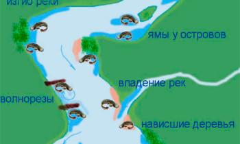 Места обитания сомов