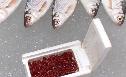 мотыльница и рыба на льду