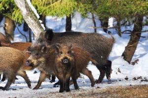 Открытие осенней охоты 2020 в башкирии