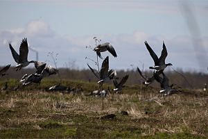 открытие весенней охоты в КБР