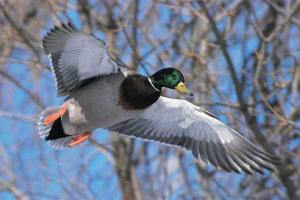 весенняя охота в волгоградской области