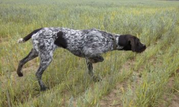 Сроки осенне зимней охоты в воронежской области на кабана 2020
