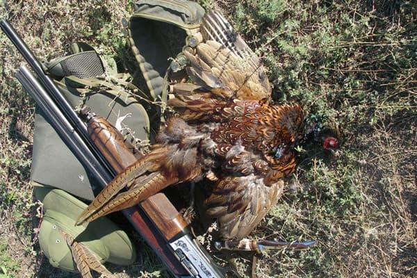 фазан и ружье