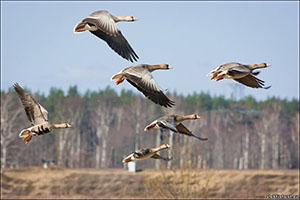 открытие весенней охоты в красноярском крае