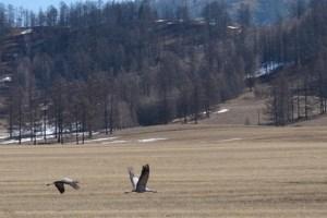 открытие весенней охоты в алтайском крае