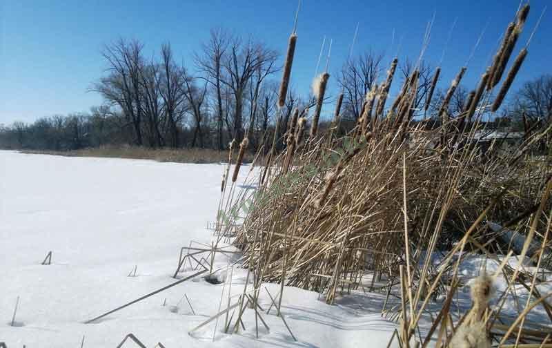 Где ловить крупного окуня зимой