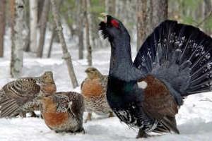 весенняя охота в нижегородской области