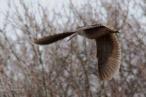 открытие весенней охоты в челябинской области