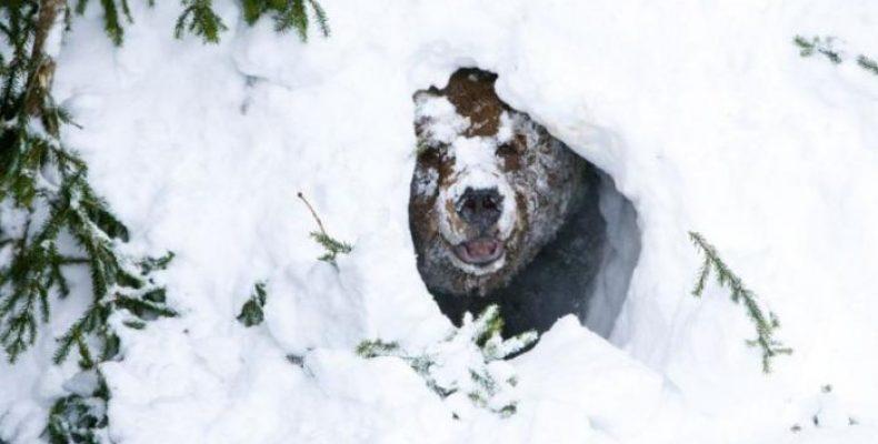 Охотимся на медведя в берлоге