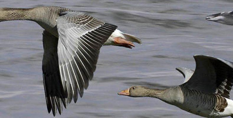 Прейскурант на услуги по весенней охоте в сезон 2014 года