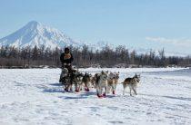 Гонка на собачьих упряжках «Берингия» на Камчатке