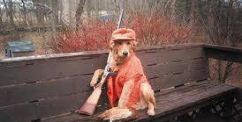 Собака на охоте «подстрелила» хозяина