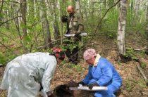 В лесах области была разложена вакцина против бешенства