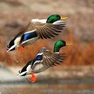 Весенняя охота 2021: сроки открытия по регионам России