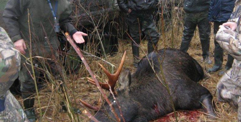Жителя Хакасии отправили в колонию строгого режима за охоту на лося