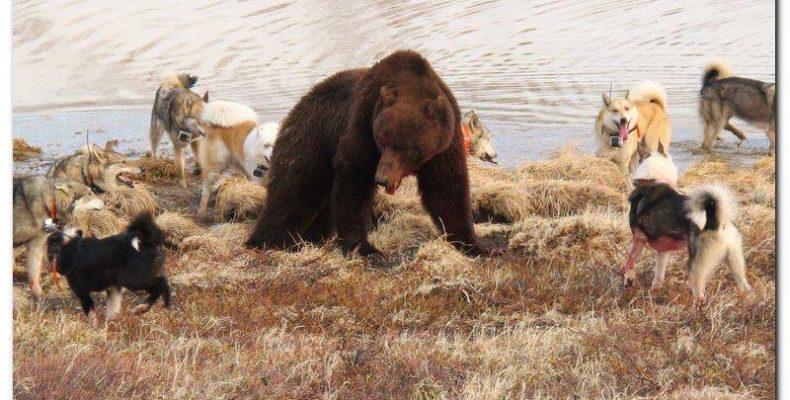 Весенняя охота на медведя