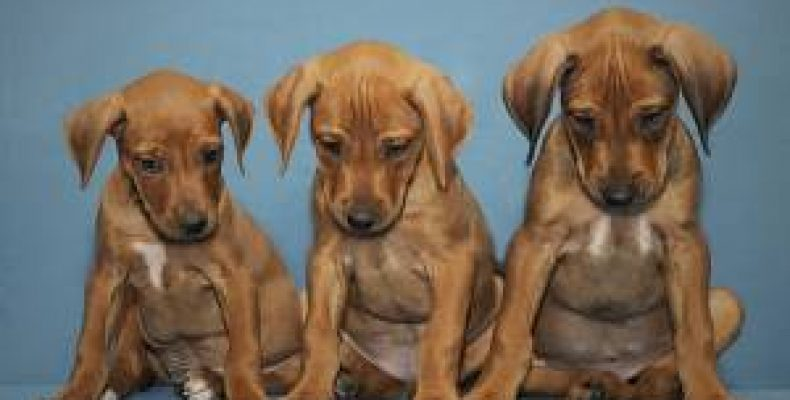 Выбор щенков