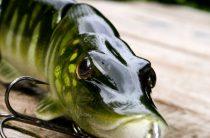 Свимбейты – новое слово в ловле хищных рыб